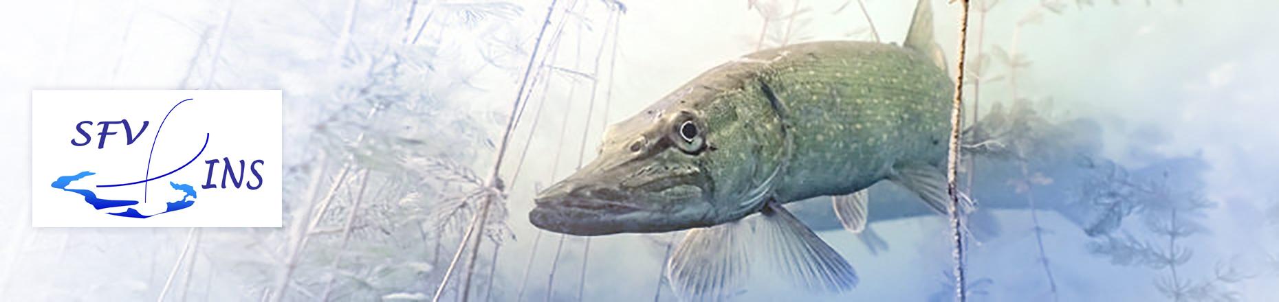 SFV INS Sportfischer-Verein Ins